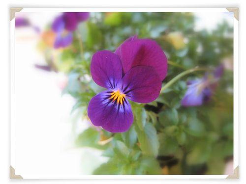 Pretty purple face