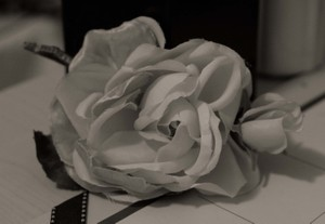 Black_and_white_rose