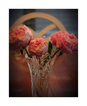 Peonies_at_home