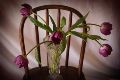 Tulips_for_me_2