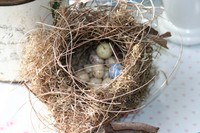 My_nest